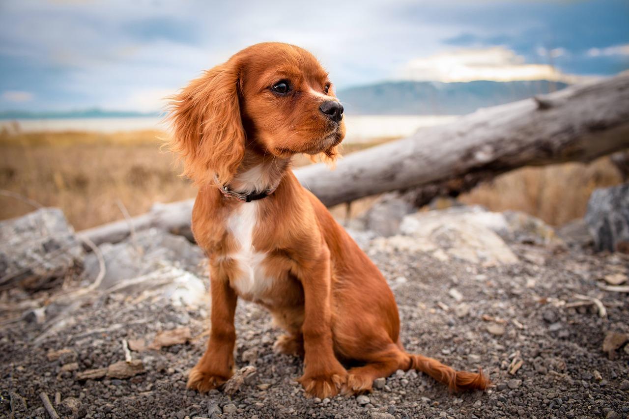 Mama mag ik alsjeblieft een hondje?!